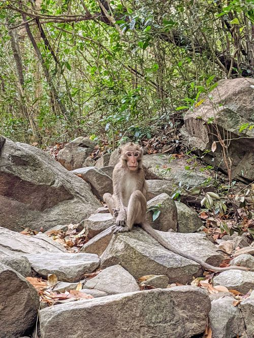 Brown and white monkey sitting on rock along Ta Cu Mountain hiking trail