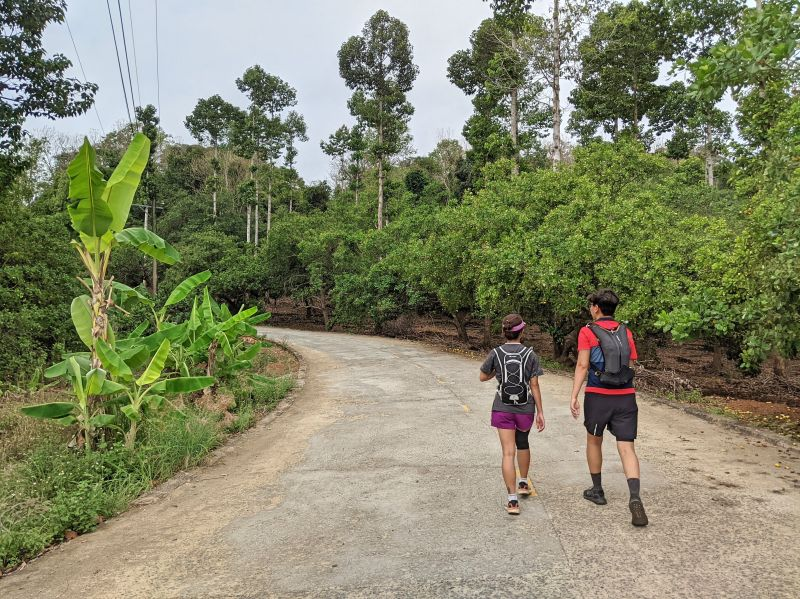 Two hikers walk up the paved road with banana and cashew trees on both side of the road to go to Nui Ba Ra Mountain in Vietnam