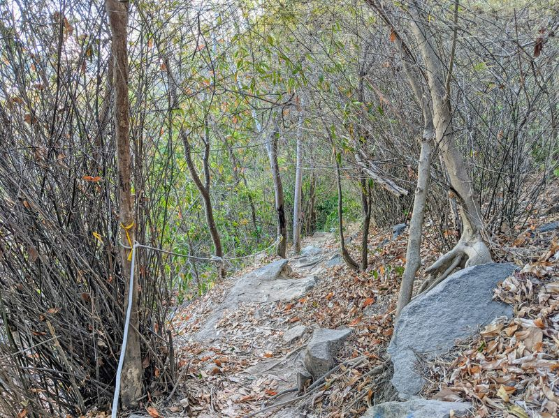 A forest area with bare trees and dried leaves on the hiking trail and a rope along the trees on Nui Lon Big Mountain in Vung Tau, Vietnam