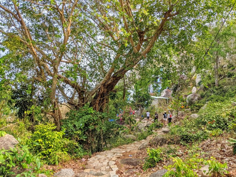 Groups of hikers walk along the stone walking path and pass by a giant tree to go to Bach Van Dong Temple on Minh Dam Mountain in Vietnam