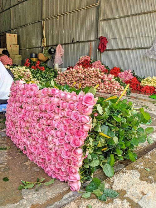 Dozens of pink, red, and yellow roses getting processed for selling in a warehouse in Dalat, Vietnam