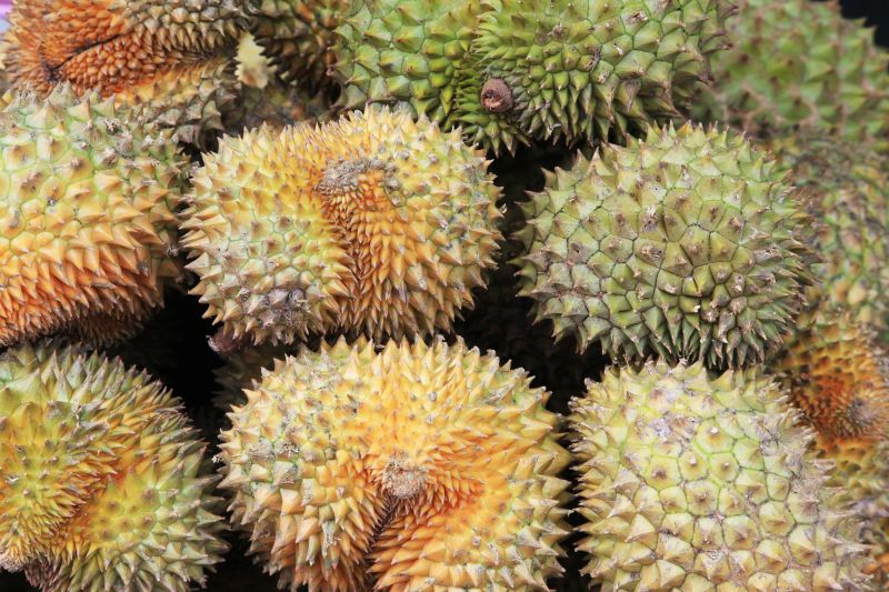 A photo of spiky durian fruits