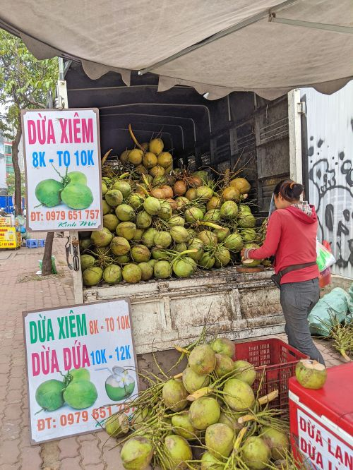 A woman selling and cutting young coconuts from a truck.